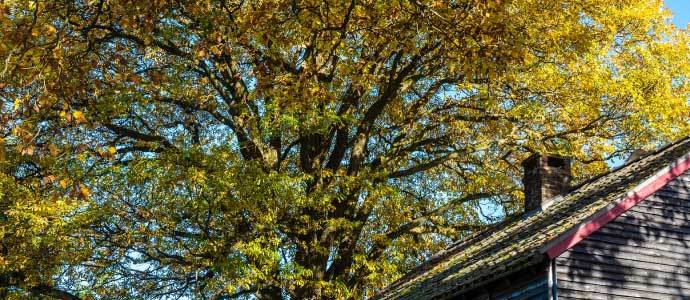 Tips to Protect your Home this Fall